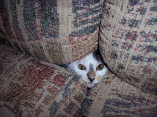 9-gatos-escondidos-en-lugares-insolitos_8